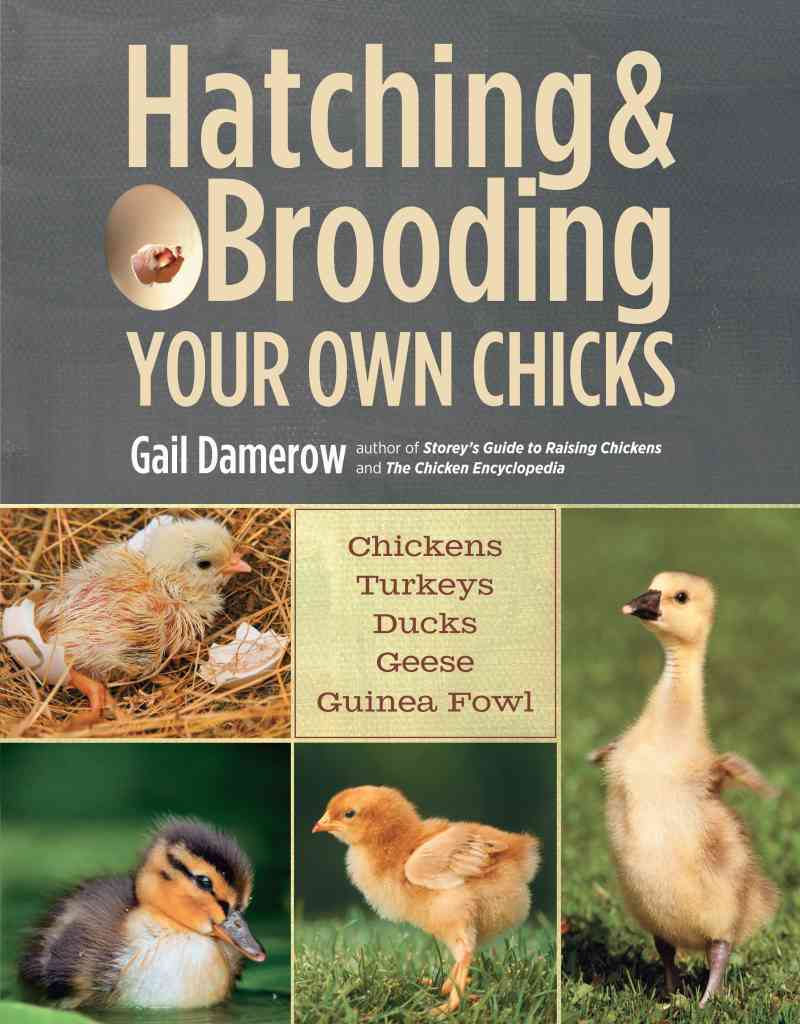 Hatching & Brooding Your Own Chicks By Damerow, Gail